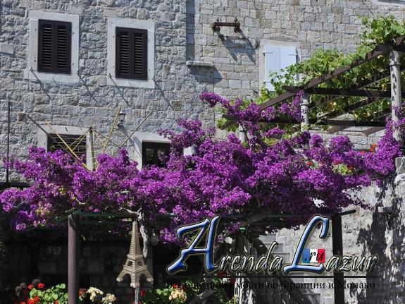 черногория частные дома